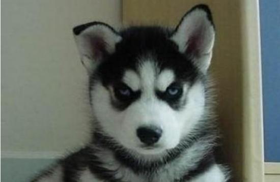 狗狗们生气时候的表情,看到第8张简直忍不住笑