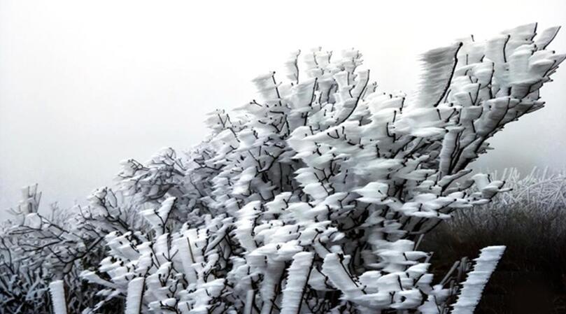 广东连山县金子山再降春雪 现奇特冰桂