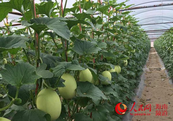 http://www.gyw007.com/nanhaifangchan/413488.html