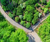 河北乐亭:生态优化工程扮美城乡