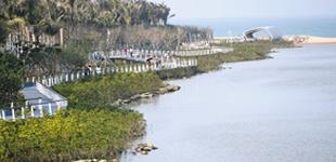 水清岸绿生态美 自然做功五源河