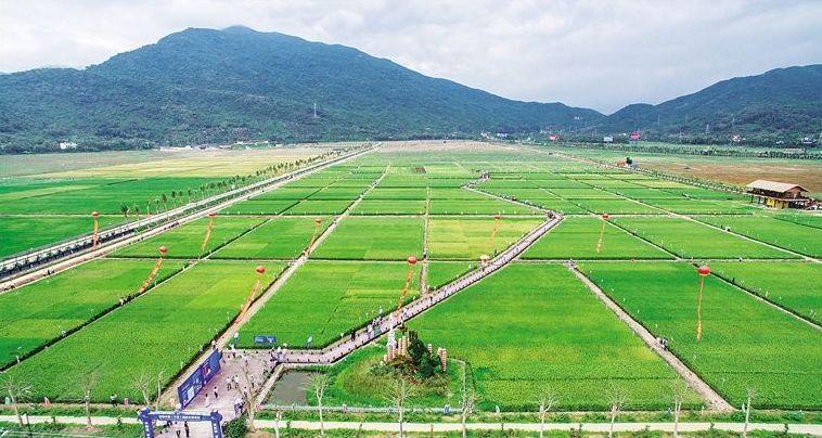 """""""中国农民丰收节""""将在三亚水稻国家公园举办"""
