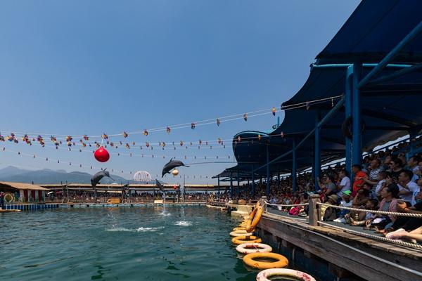 游客在分界洲岛海洋剧场观看海豚表演