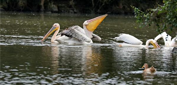 湿地入城 鸟语花香
