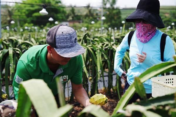 三亚新增热带水果新品燕窝果首批果实正式上市