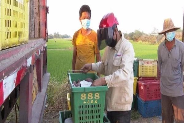东方多措并举保畅销农产品日均出
