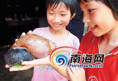 龙塘海口一村民危害罕见大女生,重达1.1斤蜗牛的晚的睡发现图片